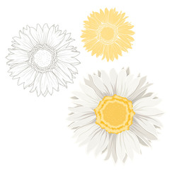 Set of isolated chamomile daisy flowers on white background. Outline sketch drawing. Detailed closeup macro vector design illustration. Spring summer plant. Forgetmenot sign symbol. White and yellow.