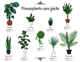 Popular and common houseplants care guide. Vector isolated collection of various indoor ornamental plants with watering and lighting norms. Monstera, rubber plant, pothos, aloe, yucca, dracaena
