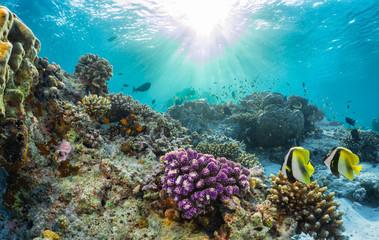 In de dag Koraalriffen Buntes Korallenriff mit tropischen Fischen auf den Malediven