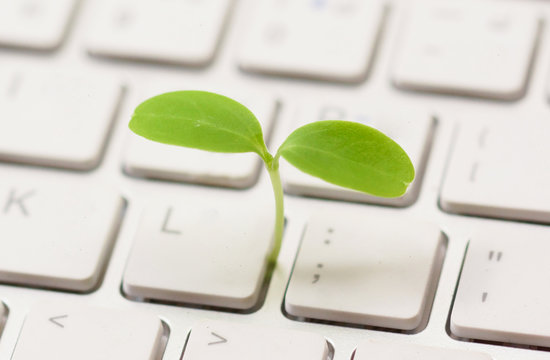 A small green plant growing from white computer keyboard / Green computing / Moral and Ethics in information technology