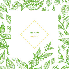 Vector template of organic nature
