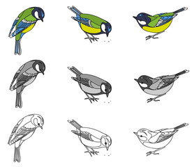 drawing of a bird of a titmouse Linear pattern, black and white and color options. Vector illustration, isolated object