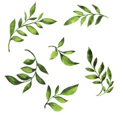 Set of green fresh branches with leaves painted by watercolor. Hand drawn illustration.