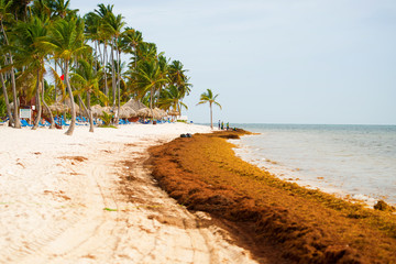 The coast of a beautiful beach is polluted with algae.