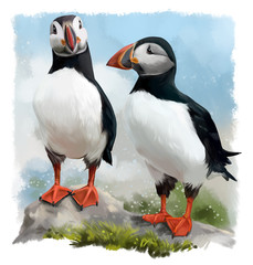 Atlantic puffins watercolor painting
