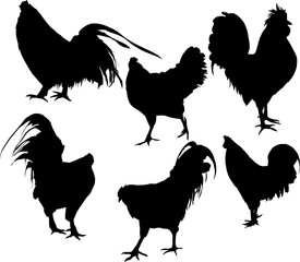 set of six chicken silhouettes isolated on white