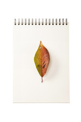 white paper ring note with leaf isolated on the white background.