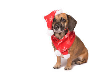 Dog in a christmas hat isolated on white