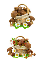 forest mushrooms and strawberry berries on a white background