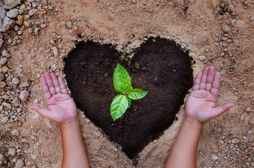 Hope of saving plant and earth concept