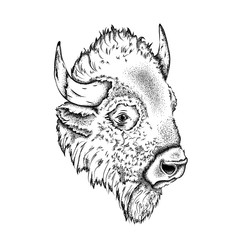 Portrait of a bison. Can be used for printing on T-shirts, flyers and stuff. Vector illustration