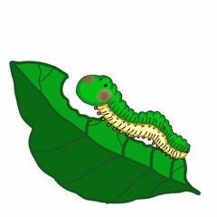 cute caterpillar illustration and leaf