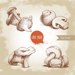 Hand drawn sketch style mushrooms compositions set. Champignons, oysters, chanterelles and porcini mushrooms. Organic eco raw food vector illustrations.