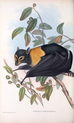 Illustration of bat