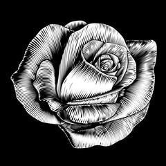 Rose Flower Vintage Style Woodcut Engraved Etching