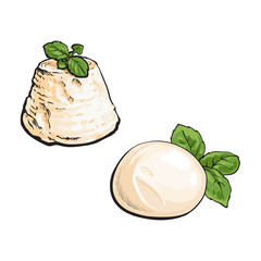 vector sketch wedge of soft blue cheese with mold and italian fresh buffalo mozzarella with basil leaf set for your design. Isolated illustration on a white background.