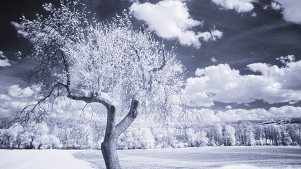 infra red photo - country