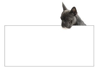 french bulldog looking over sign,