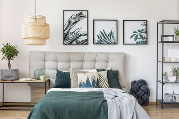 Plant and posters in bedroom