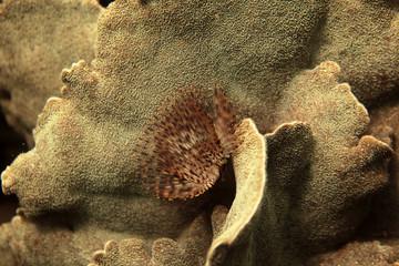 underwater world - tube worm