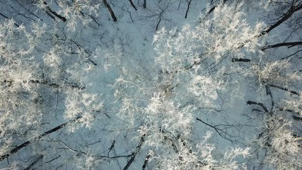 Wall Mural - Aerial view of winter forest covered by snow and hoarfrost, 4k