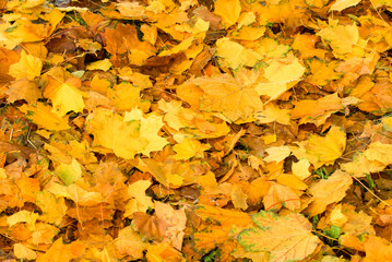 Colorful background image of fallen autumn leaves, warm autumn.