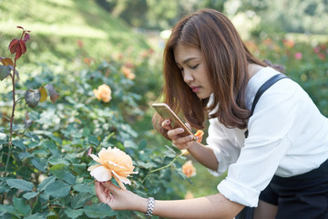 Beautiful asia woman taking photo for rose