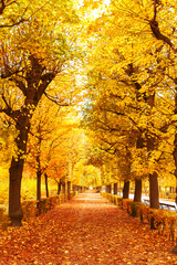 Beautiful romantic orange leave and trees in a park in autumn season
