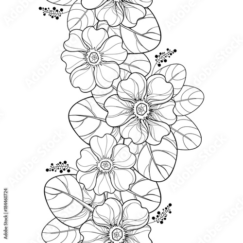 Vector Seamless Pattern With Outline Primula Or Primrose Flower And Leaves In Black On The White