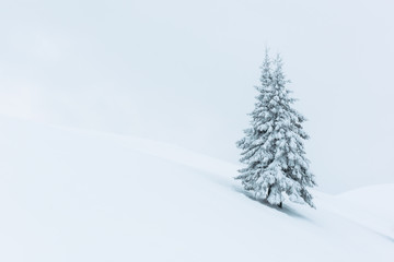 Fantastic winter landscape with alone snowy tree. Carpathians, Ukraine, Europe. Christmas holiday concept