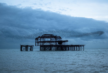 Murmuration of starlings over the ruins of West Pier, Brighton UK, photographed at dusk.