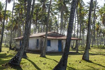Small abandoned house between coconut palm trees, Boipeba Island, South Bahia, Brazil