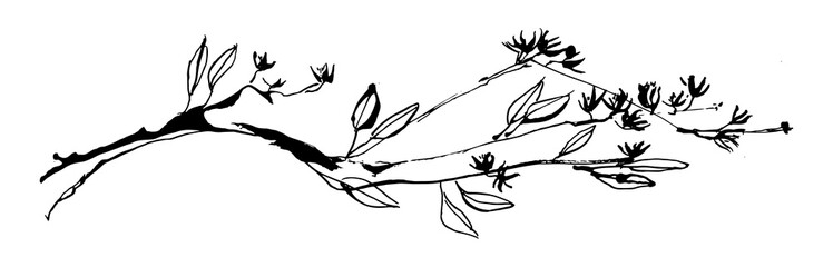 Hand drawn tree branch with leaves and flowers painted by ink. Grunge style vector illustration. Sketch black image on white background.