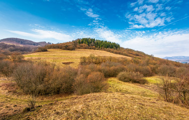 forest on a hill side meadow in high mountains. beautiful stpringtime landscape under the blue sky