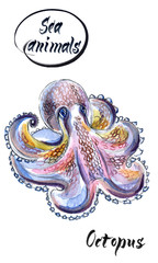 Hand drawn watercolor illustration of octopus