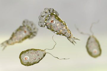 Brain-eating amoeba infection, naegleriasis. Flagellate forms and trophozites of the parasite Naegleria fowleri, 3D illustration