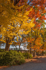 Trees change color in autumn season in Osaka park, Japan