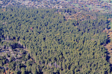 View from Mount Tabor on the coniferous cypress forest