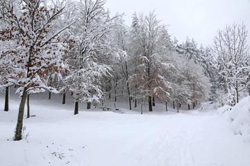 bosque nevado país vasco 4M0A0793-f17