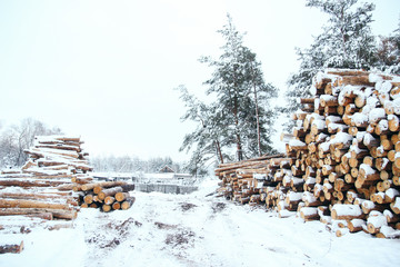firewood in the snow. Sawmill