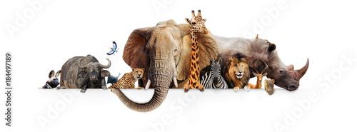 Wall mural Safari Animals Hanging Over White Banner
