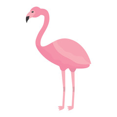 pink flamingo exotic bird decorative flat design vector illustration