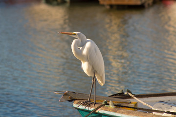 Egret on Boat