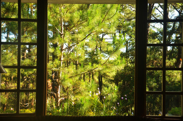 Window view of pine trees during daytime photo