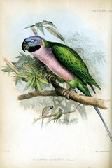 The illustrations of parrots on a white background.