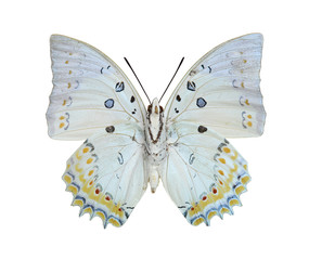 White beautiful butterfly