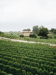 Beautiful vineyards in Bordeaux