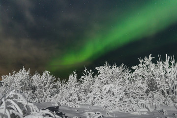 Frost ,snow on the trees.In the sky the northern lights and the aurora.