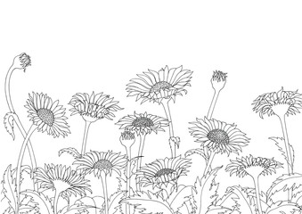 Daisy field outline sketch hand drawing on white background