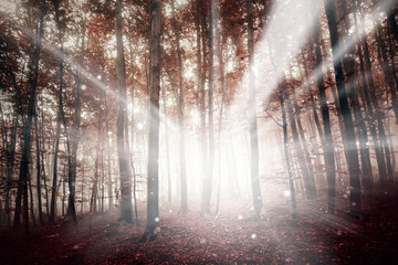 Wall Mural - Magic red colored foggy forest with ray of light bokeh background. Color filter effect used.